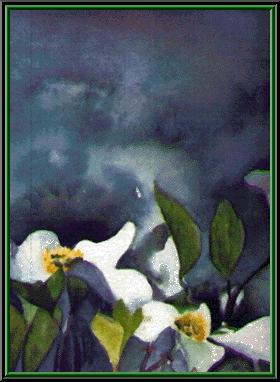 Snow Dove's Art